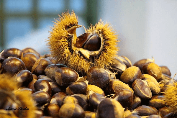 The Chestnut Festival, a festival of Tourist Singularity